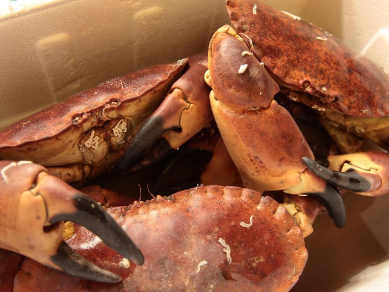 How to Remove Meat From a Crab