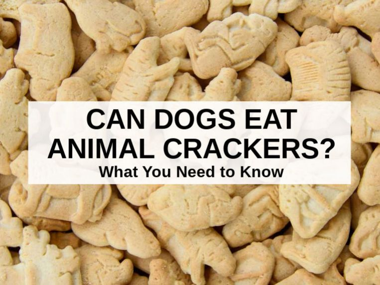 Can Dogs Eat Animal Crackers? This Is What You Need To Know
