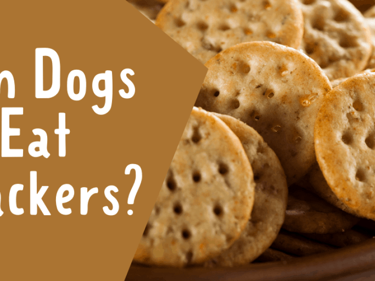 Can Dogs Eat Crackers? Should You Share Cheese, Ritz, And