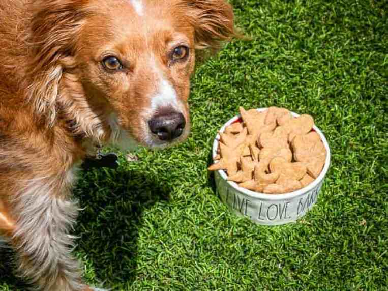 Easy Peanut Butter Dog Treats • Love From The Oven